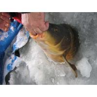 Зимняя ловля карпа.